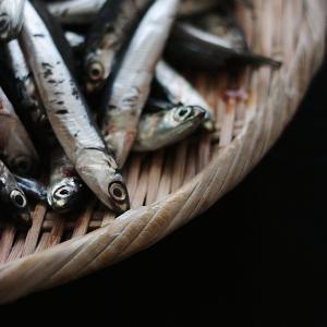美味しい暮らし|江の島沖しこいわしで自家製アンチョビ仕込み