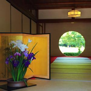 鎌倉散歩|見ごろの紫陽花、北鎌倉 明月院へ。