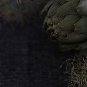 花のある暮らし|旬のスモークツリーとアーティーチョーク