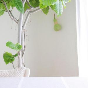 夏におすすめ! 涼しげで育てやすい観葉植物