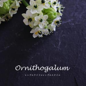 花のある暮らし|ホワイト&グリーンカラーで爽やかに。久しぶりに飾ったオーニソガラム。