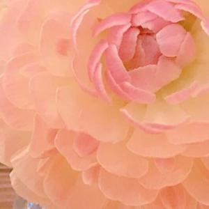 素敵な花言葉♡ 飾らない美しさを持つ女性って素敵ですよね。