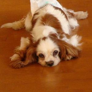 足腰の弱い老犬のために&あきちゃんのためにパート2