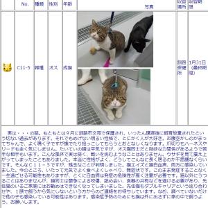 """""""釧路保健所の猫に最終期限つきました1月31日"""""""