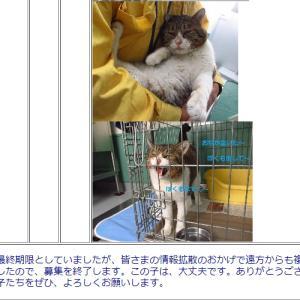 1月31日最終期限だった釧路保健所の猫ちゃんその後
