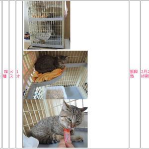釧路保健所負傷猫最終期限2月21日