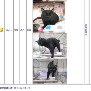 釧路保健所に収容されている猫達