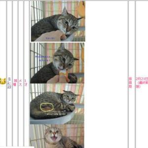 釧路保健所負傷猫ちゃん明日最終期限です