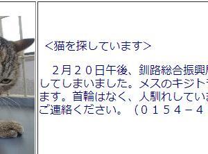 釧路保健所負傷猫ちゃん明日最終期限その後