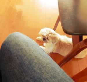 忠犬ミミ公