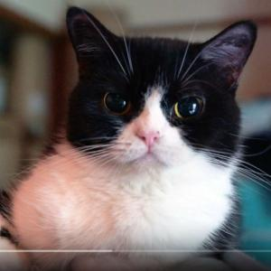 猫を飼うと「風邪予防」になる!?
