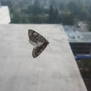 大きな蛾の襲来で窓を開けたら大変