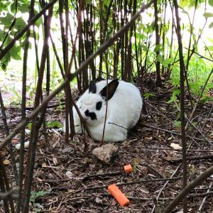 ウサギに会えるよ。モンマルトル公園。