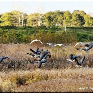 水鳥の群舞