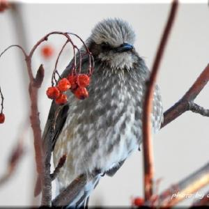 今朝の小鳥