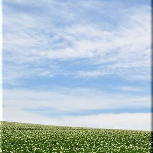 初夏の丘でジャガイモの話