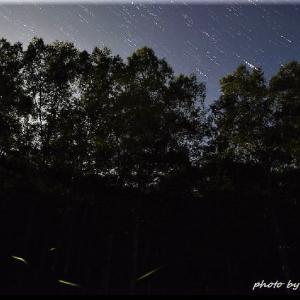 蛍と星の光跡