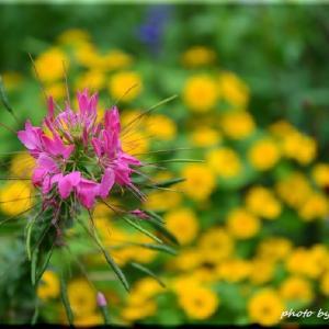 百合が原公園の花々