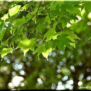 緑の木の実