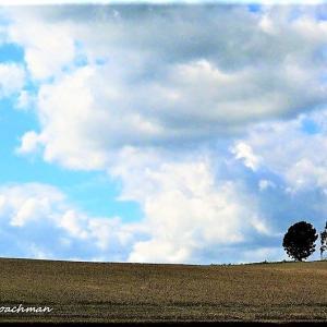 丘の風景2(美瑛町)