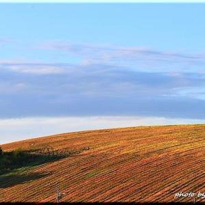 丘の風景3(美瑛町)