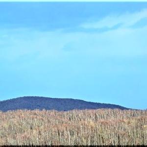 森見の塔からパノラマ画像
