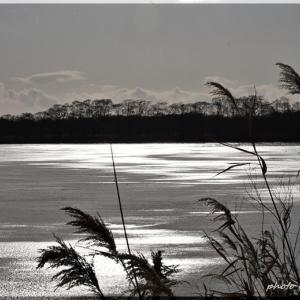 寒風のウトナイ湖