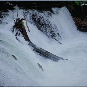 「さくらの滝」清里町