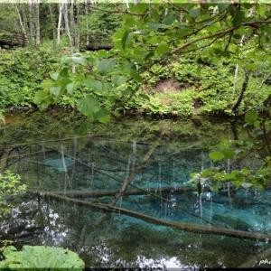 六月の神の子池
