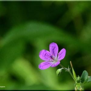平岡樹芸センターの花たち