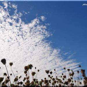 九月の空と雲