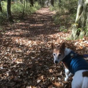 ジャックラッセル シニア犬 15歳 の備忘録