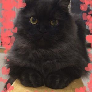 黒猫感謝の日*