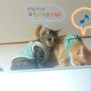 ☆茶髪猫野郎、いちいち目ざとい☆
