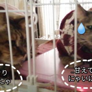 ☆づがれた_(」∠ 、ン、)_☆
