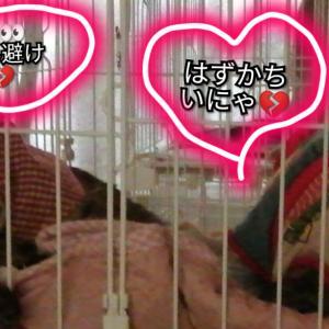 ☆いつものルーティーン・・・に(๑ꙨꙻдꙨꙻ๑)!?☆