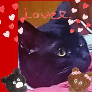 ✦黒猫かわいい^^✦