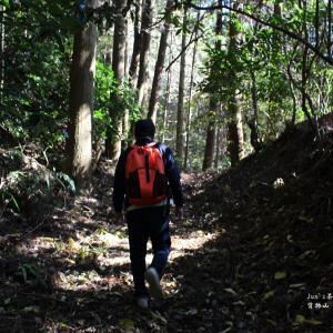 佐賀茶文化の旅④【背振山・石上坊跡】のヤマチャとその生態環境