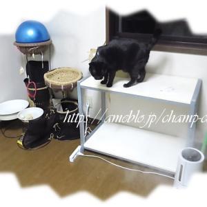 各部屋に猫パト台が設置される日も近い カモシレナイ