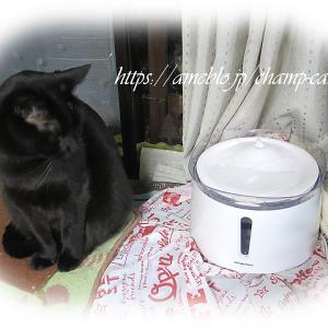 猫の自動給水器 お手入れ楽なのは