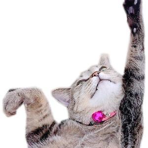 """猫リンピック7 """"猫リンピックに参加表明しまーす⸜(* ॑꒳ ॑*"""""""