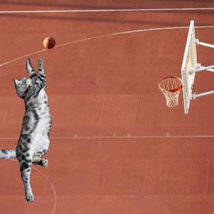 猫リンピック23 野球 バスケットボール