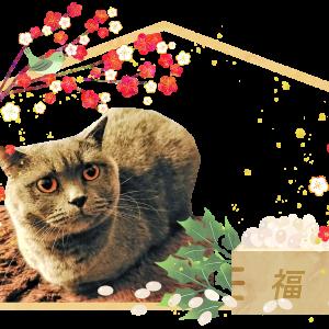 猫リンピックの節分4
