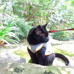 階段を下りるのは嫌いな黒猫