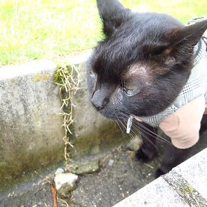 猫の腎不全を考える会2