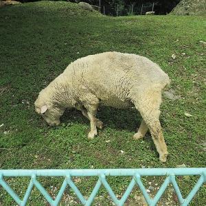 好意的羊と好戦的羊