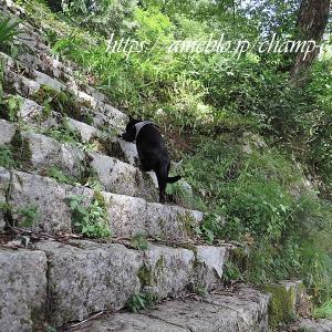 夏の丹生川渓谷と猫のための糊