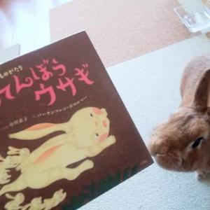 ジャータカ物語 あわてんぼうウサギ
