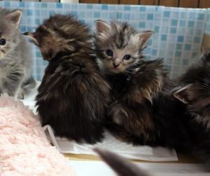 子猫達とちょっと大きくなった子猫達