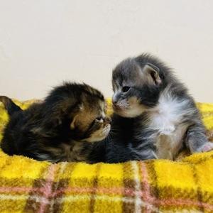 子猫が生まれておりました。